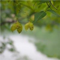 ★秋の里山でよく見る山野草(1)