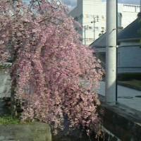 茂木の音楽小路 第1回〜作品との出会い3