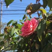 桜が散って 薔薇や色々な花