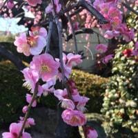 春近づいています。