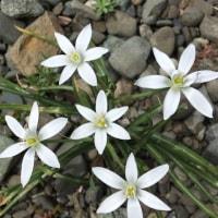 今日もやっぱり小さな花たち