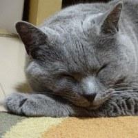 ◆可愛い寝顔◆