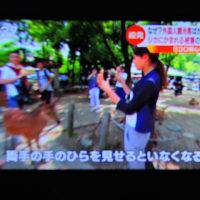 5/24 野生の動物 奈良の鹿が観光客にかみつく