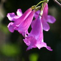 外国で滞在しているとき無名のお花が沢山咲いていて。シャッタ押し放しです