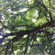 木漏れ日と風邪と夢