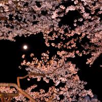 徳島中央公園の夜桜