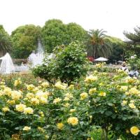 薔薇の咲く須磨離宮公園