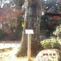 樹齢00百年(^^)/