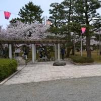 桜咲く満開(芦城公園、足羽山公園、足羽川、丸岡城編)