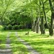 シャリファ・アスマの2番花&夏の公園