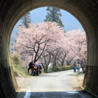 少し早い桜と満開の梅