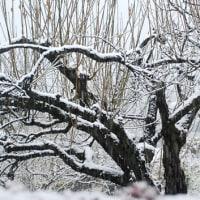 閑話休題 雪(2)