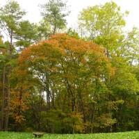 種山高原(10/20、紅葉と黄葉)