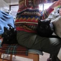 黒猫サンド