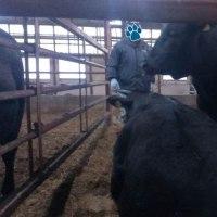 困った知多牛[はる ♀]・・・
