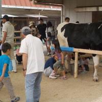 「牛の乳しぼり」体験イベント^^