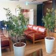 人工観葉植物の設置