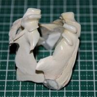 P,エチオの顎標本が完成