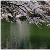 「丹 生 湖」(にゅうこ) の 桜   (1の1)  ★ 2017.04.30 ★