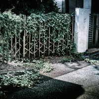 【Aug_17】裂開する緑_OVERGROWTH#3