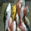 旬な魚を追う