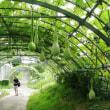 ヒョウタンのトンネル
