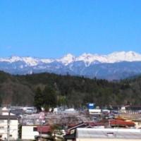 高山市内の桜満開