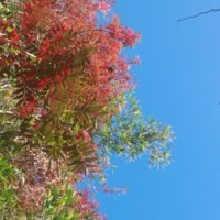 虫食いの穴から見上げる秋の空 落ち葉住居の稀少な命  真鹿子(まかこ) まだ未確認、未発見の、幽玄発酵(発光)体微生物☆