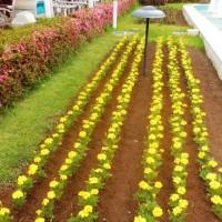 噴水花壇も夏花に