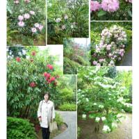花巡り 「石楠花-2」    三室戸寺