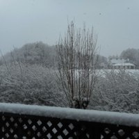 3月の雪~ゆっくり春は近づいているのでしょうか~