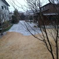 今年初雪が降りました
