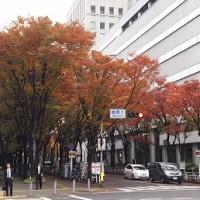 …街の紅葉…