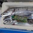 リベンジ 太刀魚