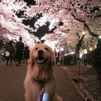 高田公園へお花見・・・後編♪