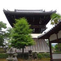相国寺に咲くハスの花やタチアオイ!