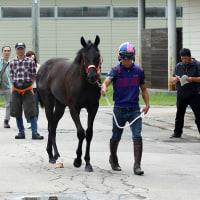 JRA日本中央競馬会購買馬が「日高育成牧場」と「宮崎育成牧場」へ入厩