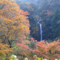 今日も須津川渓谷へ