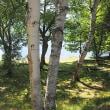 ★7月の女神湖の風景 2017