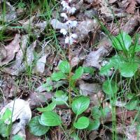別荘地内の植物
