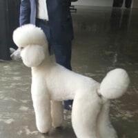 RAIN  愛犬サランとの事