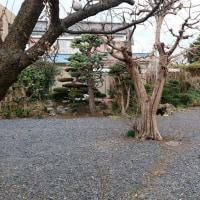 タイトル〝ボールのある庭の風景〟