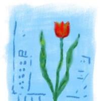 ☆チューリップの花たち