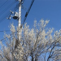 梅が咲く(2)