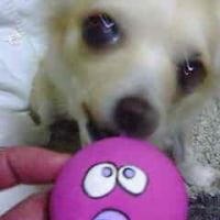 愛犬のおもちゃ