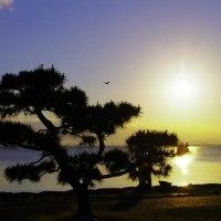 びわ湖の朝