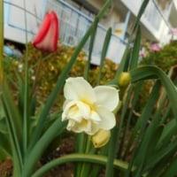 春のお花達
