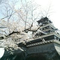 熊本弁日記(^_^)~熊本城の桜