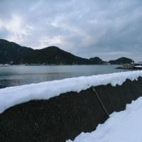 雪積もる漁港のメバル