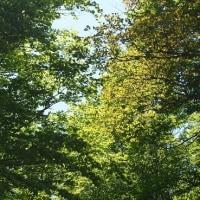 新緑、檜原峠